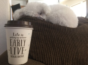 coffee and the pooch